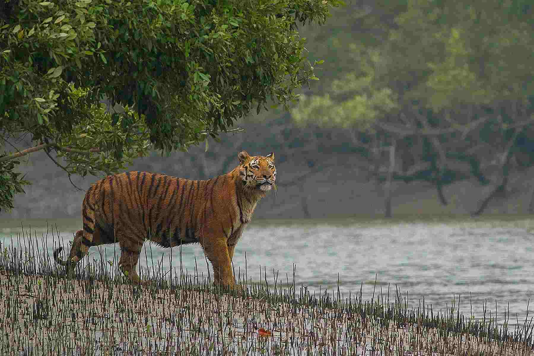 UNESCO WORLD HERITAGE SITE Sundarban Tour  Wedding Package